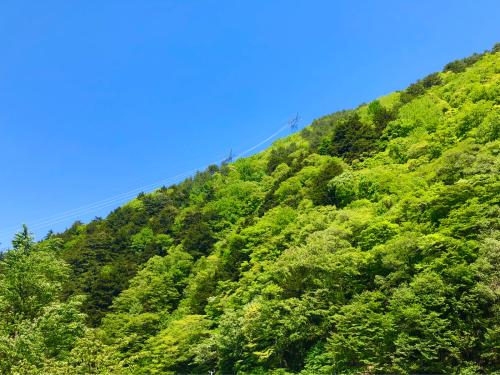 新緑のエネルギー!_e0248949_16450273.jpg