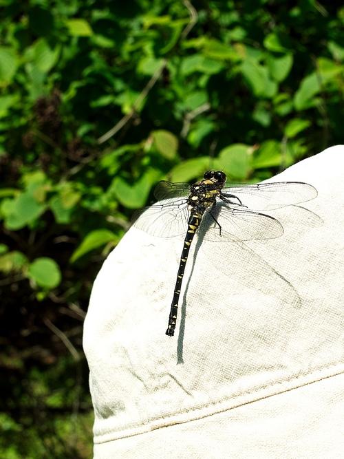 温度計33℃の表示・・・ライン張りと重度の飛蚊症!_d0005250_1933559.jpg