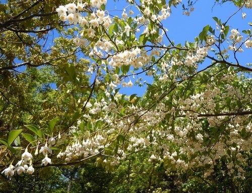 初夏の公園には白い花が似合う_b0102572_10565319.jpg