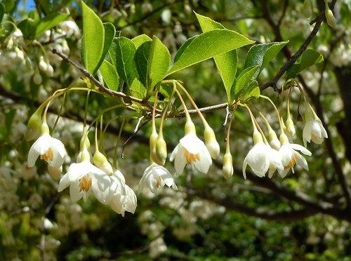 初夏の公園には白い花が似合う_b0102572_10571478.jpg