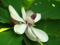 初夏の公園には白い花が似合う_b0102572_10585230.jpg