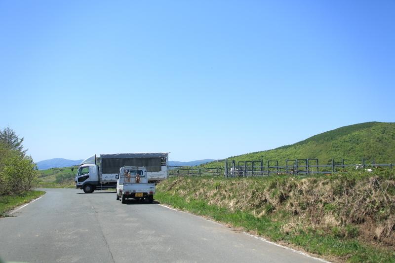 荒川高原に、牛馬放牧され始める。_f0075075_15202600.jpg