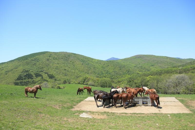 荒川高原に、牛馬放牧され始める。_f0075075_15222397.jpg