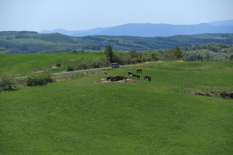 荒川高原に、牛馬放牧され始める。_f0075075_15241427.jpg