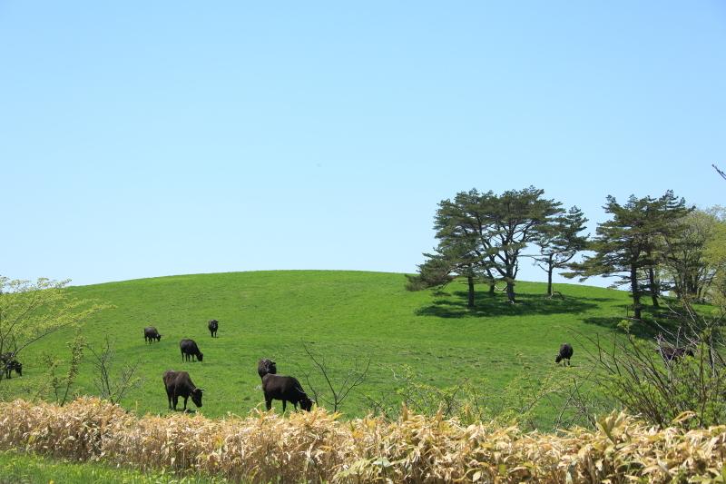 荒川高原に、牛馬放牧され始める。_f0075075_15245323.jpg