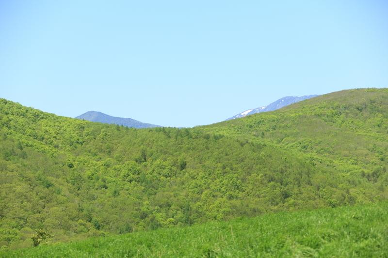 荒川高原に、牛馬放牧され始める。_f0075075_15285490.jpg