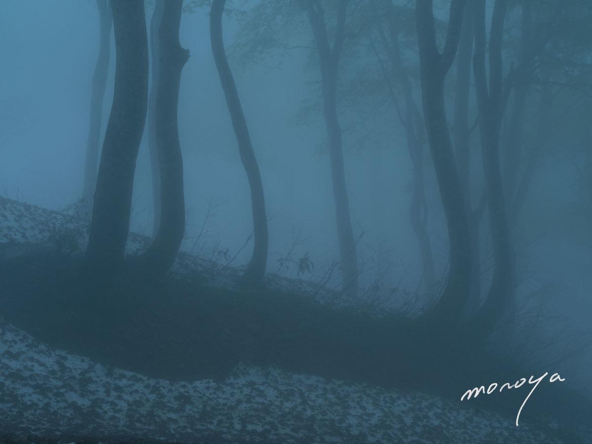 霧のブナ林_c0085877_05544079.jpg