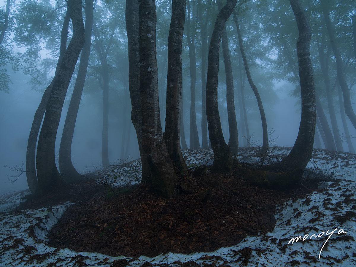霧のブナ林_c0085877_05544714.jpg
