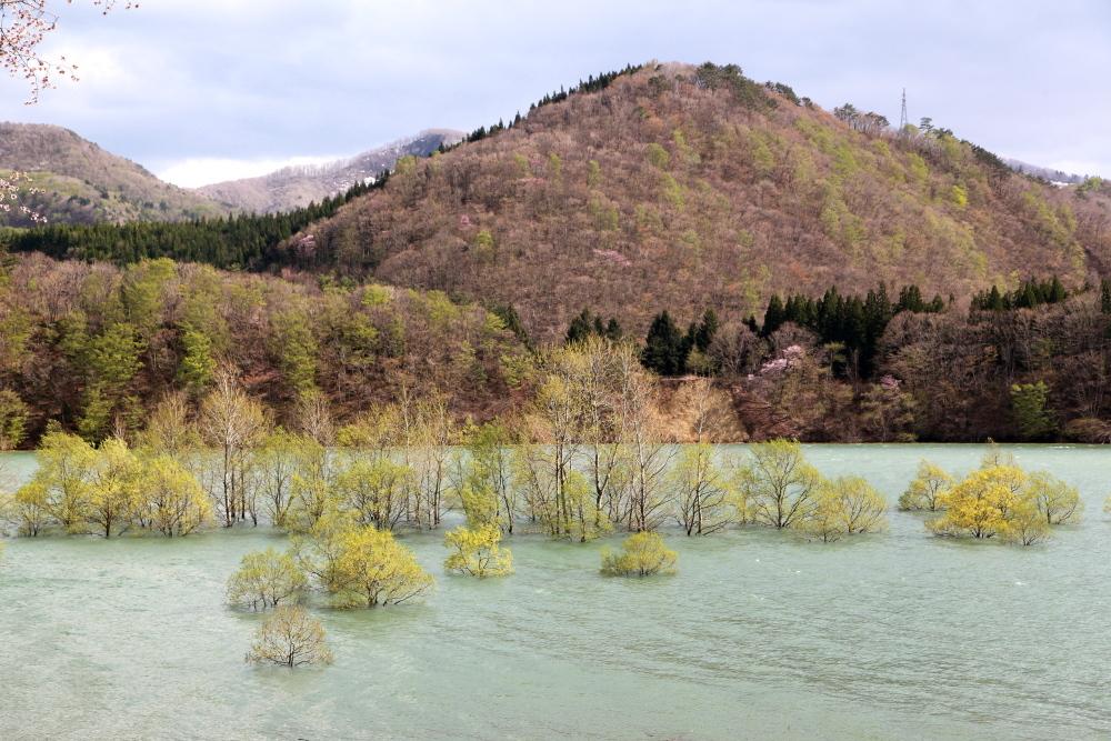 西和賀町 錦秋湖に沈む新緑 その3_e0165983_10010351.jpg