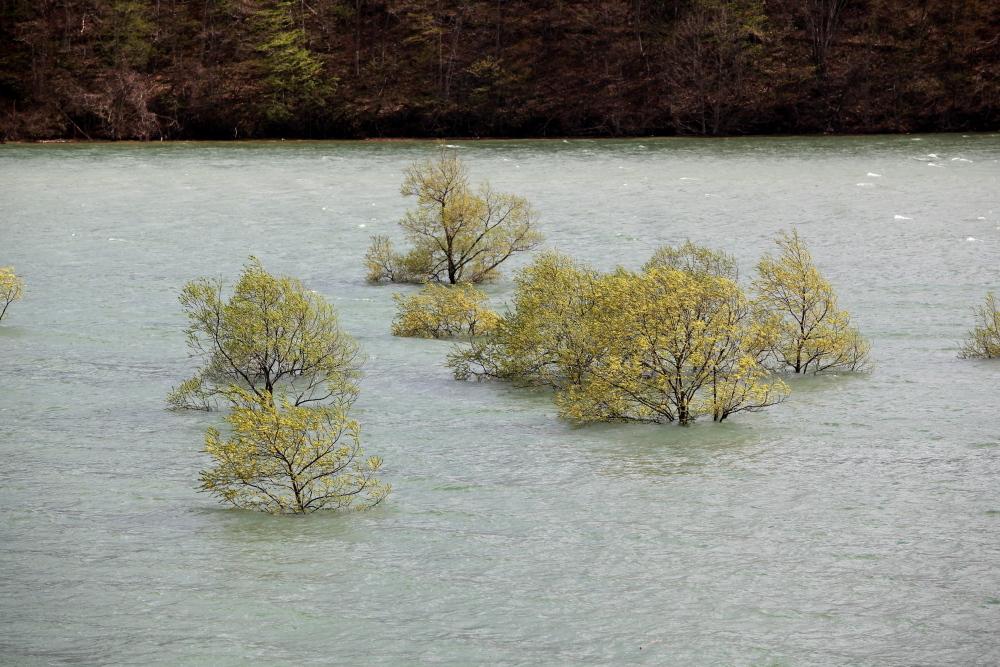 西和賀町 錦秋湖に沈む新緑 その3_e0165983_10050058.jpg