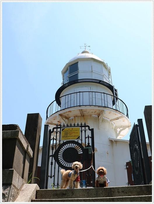 今年もまた、関崎海星館のアサギマダラに会いに出掛けてきました_b0175688_20271054.jpg