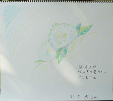 初夏の花_b0364195_09203857.jpg