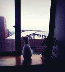 窓からの風景_e0001808_1451349.jpg