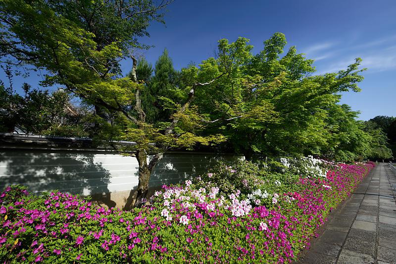 初夏の花巡り・平戸躑躅 妙満寺_f0032011_21231104.jpg