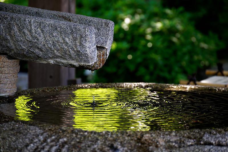 初夏の花巡り・平戸躑躅 妙満寺_f0032011_21231225.jpg