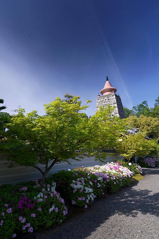 初夏の花巡り・平戸躑躅 妙満寺_f0032011_21262594.jpg