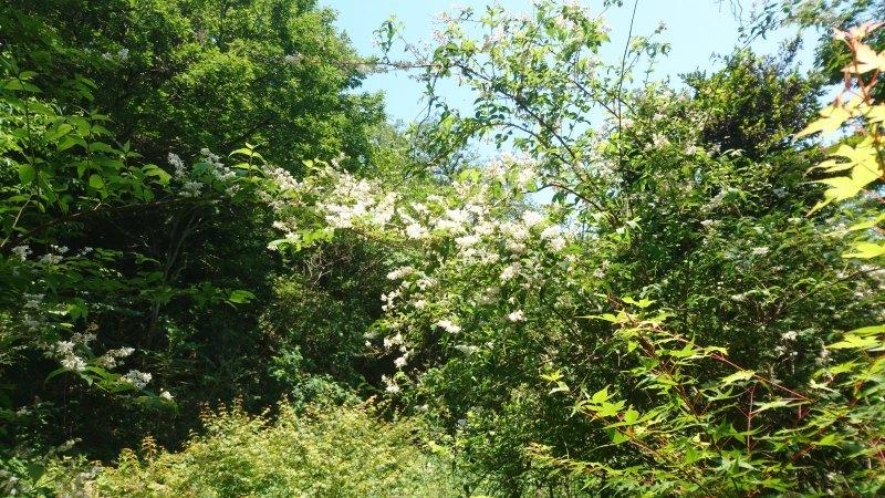 満開の卯の花と生物に親しむ一日_c0239329_08054613.jpg