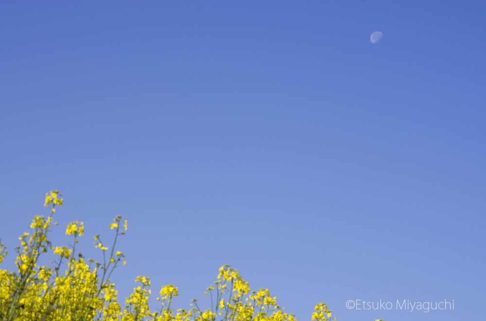 空と菜の花_f0152939_04445149.jpg