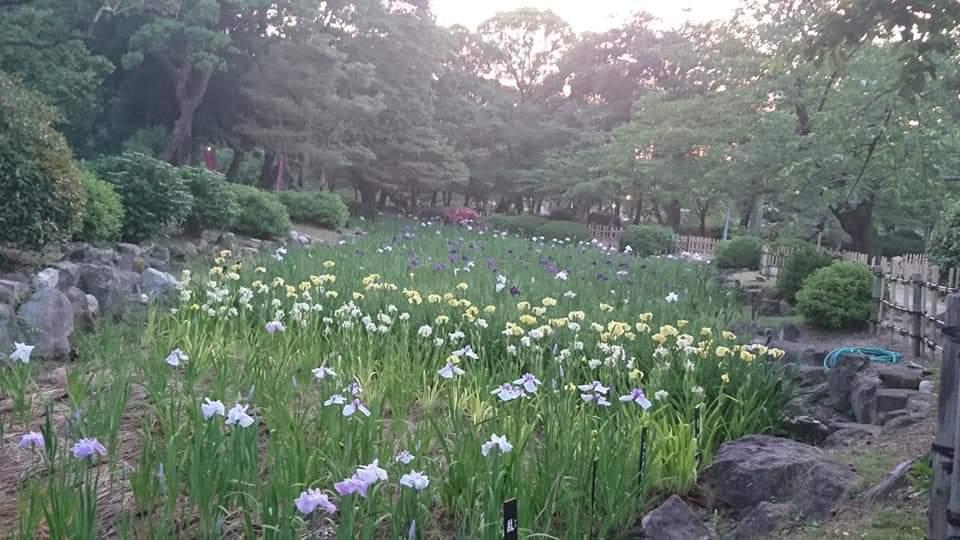 うな富士~鶴舞公園!_f0373339_23023943.jpg