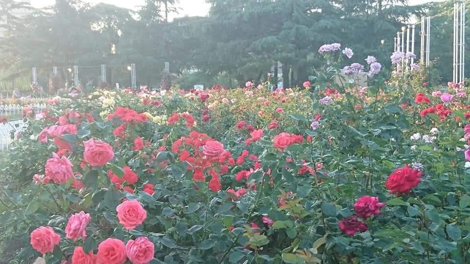 うな富士~鶴舞公園!_f0373339_23024022.jpg