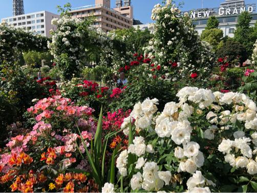 朝の横浜中華街を散歩。_f0207146_16530166.jpg