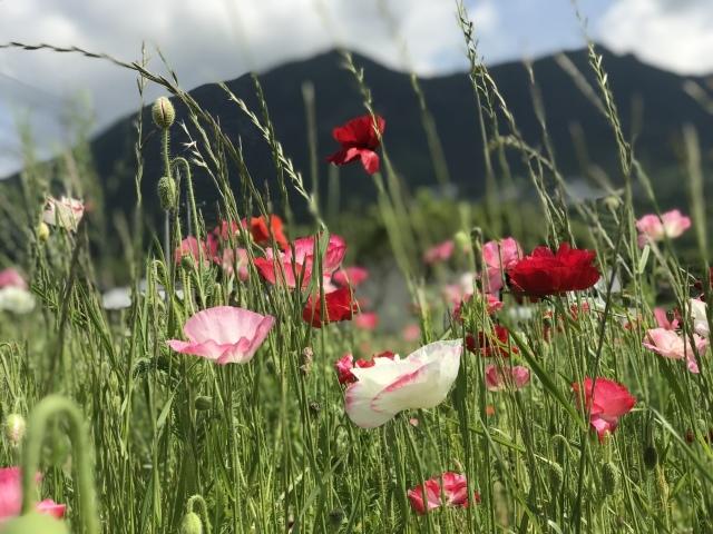 5月中頃の筑波山 麓の風景_c0213352_21034072.jpeg
