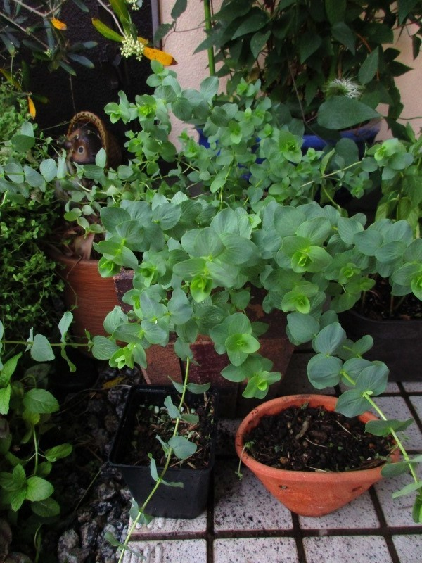 植物「リベンジ&アオワーネッキー発根」_b0362459_17044840.jpg