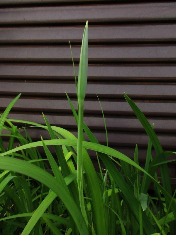 植物「リベンジ&アオワーネッキー発根」_b0362459_17171207.jpg
