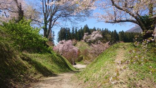 猪苗代城の桜   _d0096268_13483662.jpg
