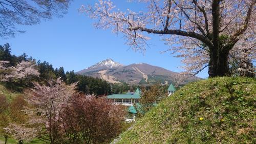 猪苗代城の桜   _d0096268_13535023.jpg