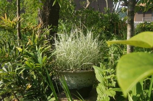 トワダアシの地植え_e0181373_21460353.jpg