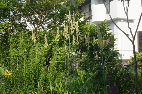 トワダアシの地植え_e0181373_21464681.jpg