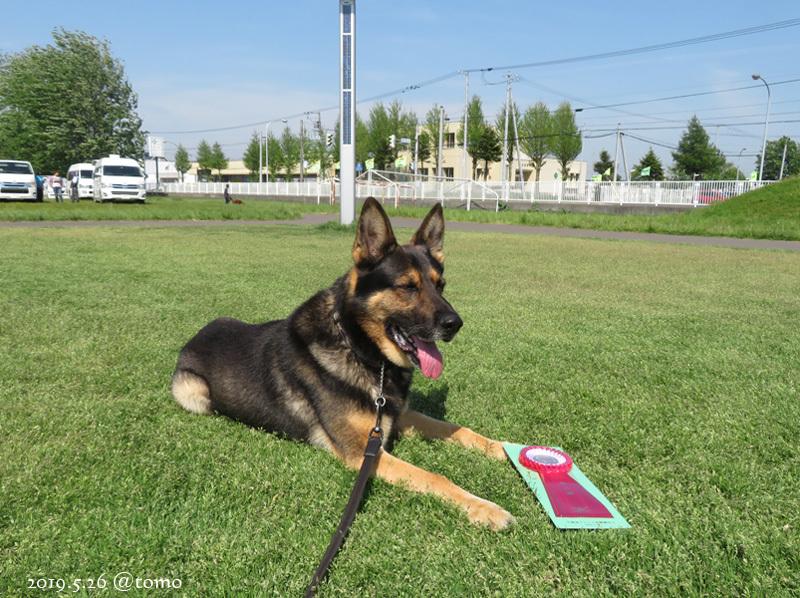 2019年5月JKC北海道ブロック訓練競技会_f0067179_21375355.jpg