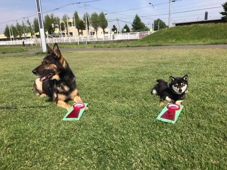 2019年5月JKC北海道ブロック訓練競技会_f0067179_22115826.jpg