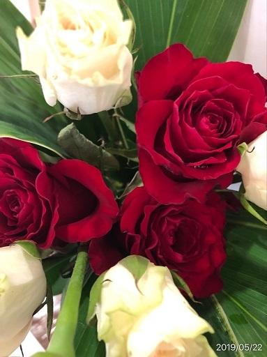 薔薇_f0202682_19062297.jpg