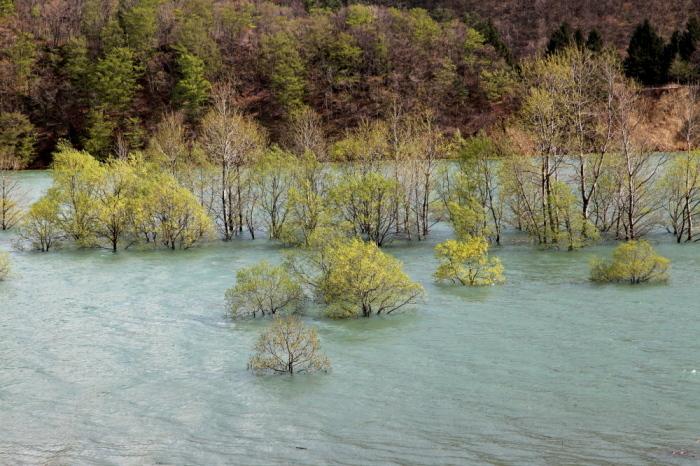 西和賀町 錦秋湖に沈む新緑 その4_e0165983_10325342.jpg