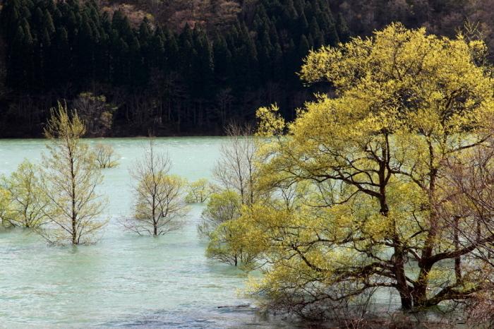 西和賀町 錦秋湖に沈む新緑 その4_e0165983_10330044.jpg