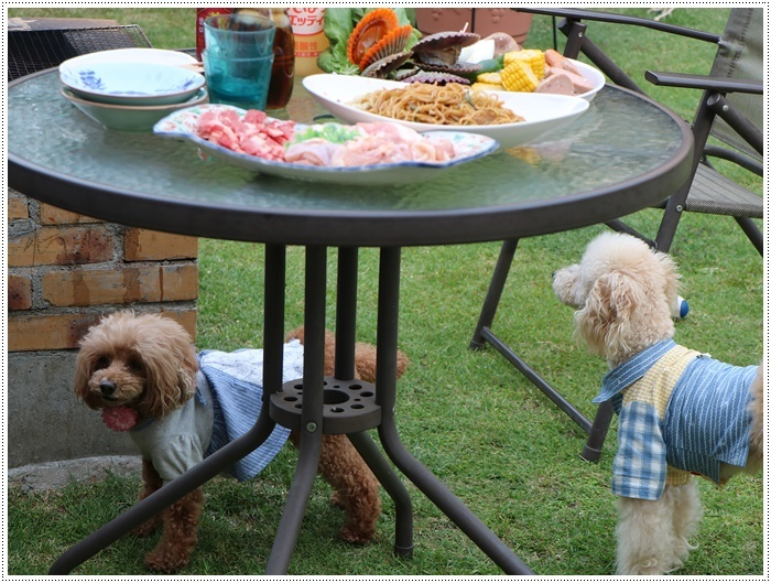 我が家は今週3連休だったようなもので、最終日はお庭で友達とランラン、夕飯はBBQ、さくらも大も充実してたね~_b0175688_20201981.jpg