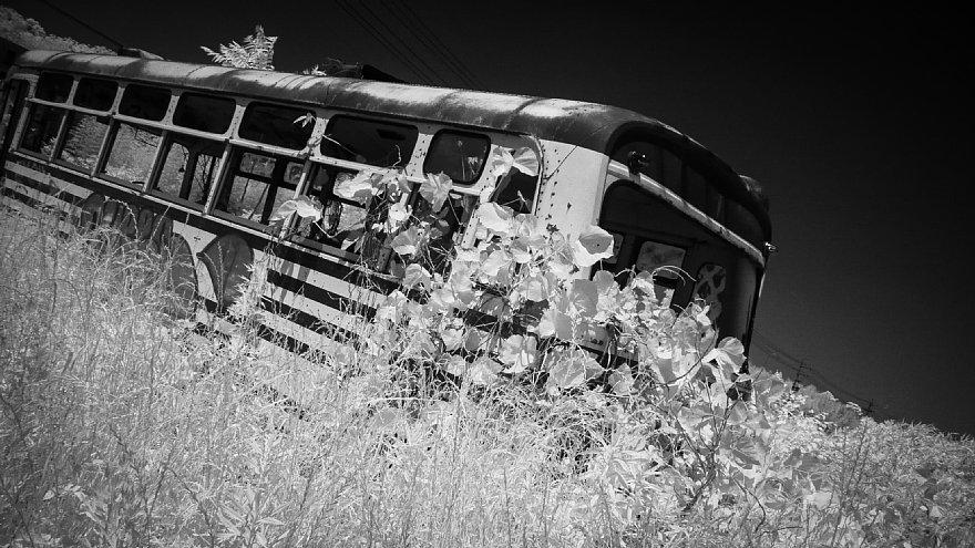 初夏の廃バス_d0353489_18482876.jpg