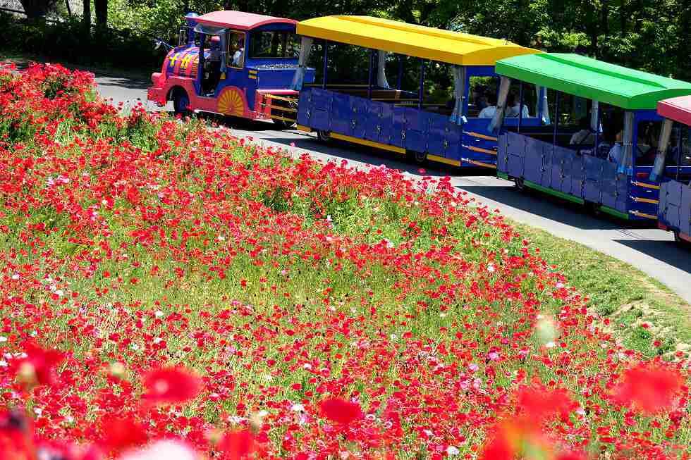 昭和記念公園のお花_e0348392_16472759.jpg
