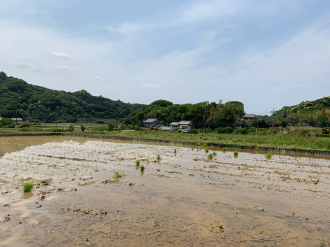 千葉県 富津市の田んぼに田植えのお手伝いに。_a0112393_08433193.jpg