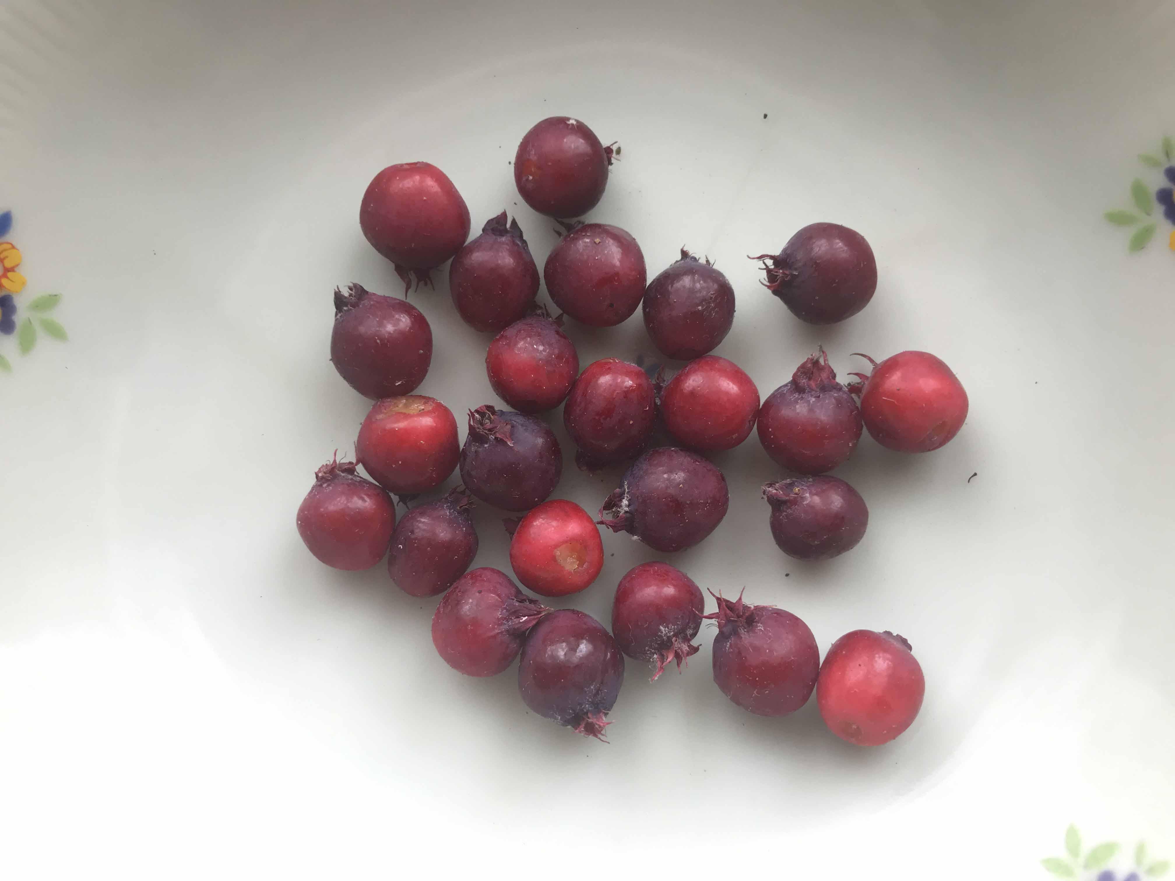 ジューンベリーの収穫_a0026295_157023.jpg