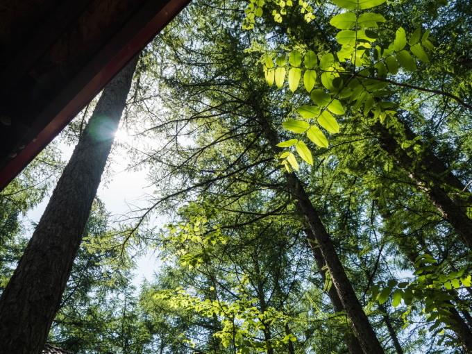 新緑の5月、初夏を通り越し・・中札内村でも37℃の猛暑日に!_f0276498_23394936.jpg