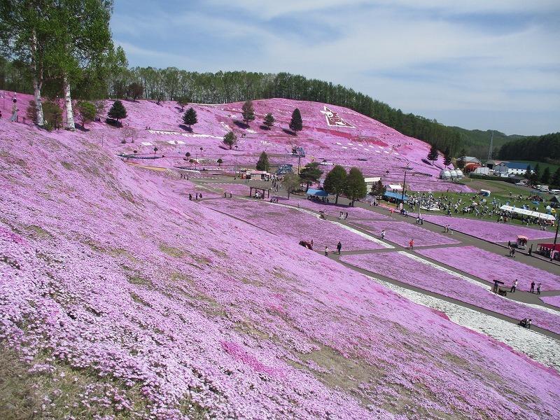 5月26日(日)・・・19日の休業日。東藻琴の芝桜②_f0202703_00551824.jpg