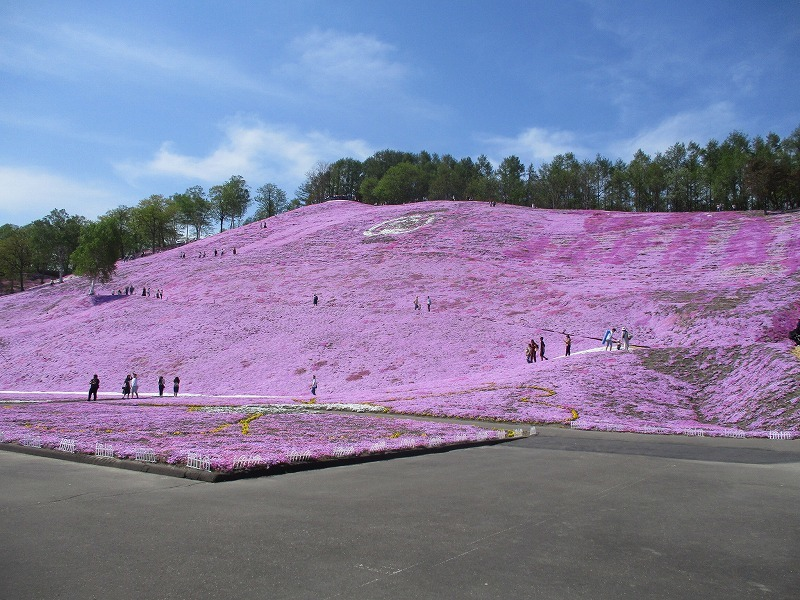 5月26日(日)・・・19日の休業日。東藻琴の芝桜②_f0202703_00565194.jpg