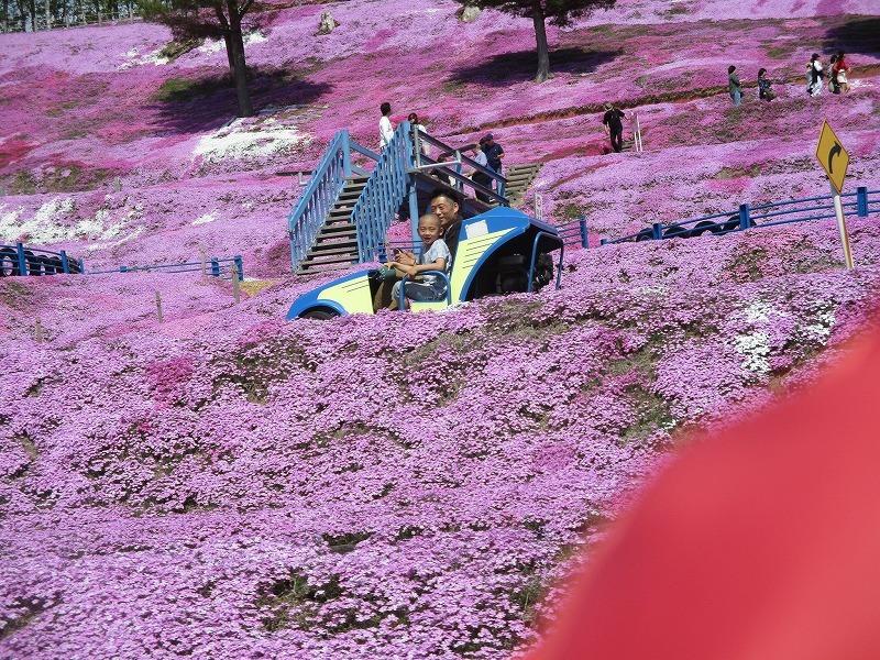 5月26日(日)・・・19日の休業日。東藻琴の芝桜②_f0202703_01020568.jpg
