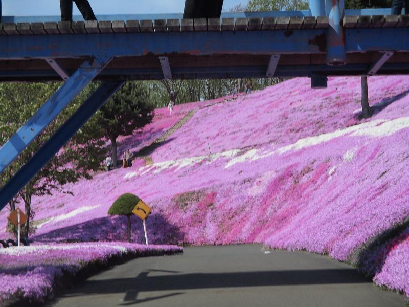 5月26日(日)・・・19日の休業日。東藻琴の芝桜②_f0202703_01030712.jpg
