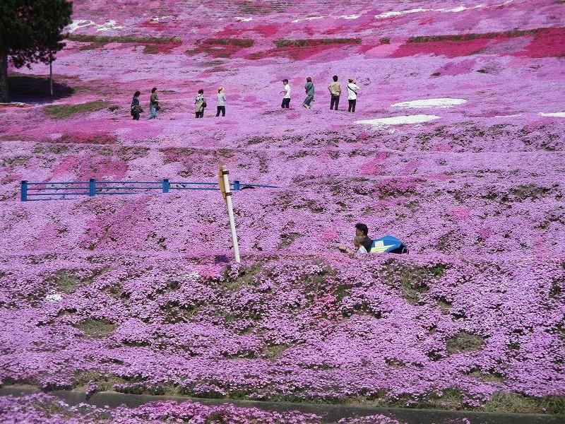 5月26日(日)・・・19日の休業日。東藻琴の芝桜②_f0202703_01041675.jpg