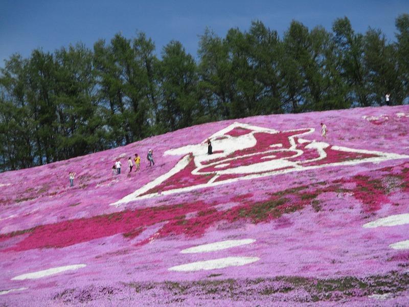 5月26日(日)・・・19日の休業日。東藻琴の芝桜②_f0202703_01061740.jpg