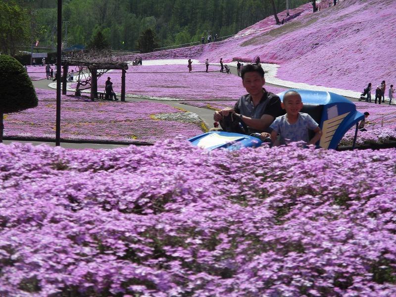 5月26日(日)・・・19日の休業日。東藻琴の芝桜②_f0202703_01142246.jpg